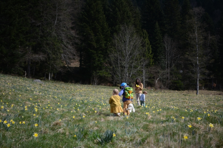 9 avril premol jonquilles (11)