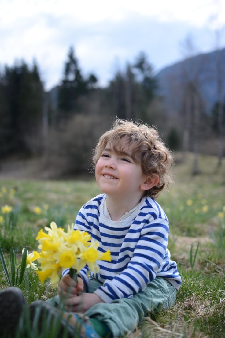 9 avril premol jonquilles (15)